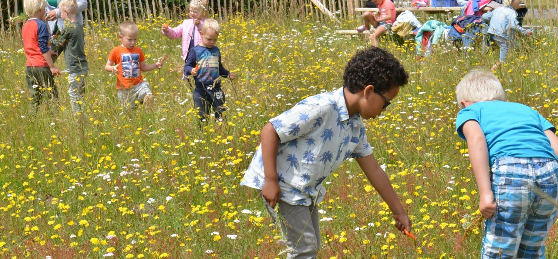 Voorjaarsfeest in de bloemenweide van Natuurmonumenten