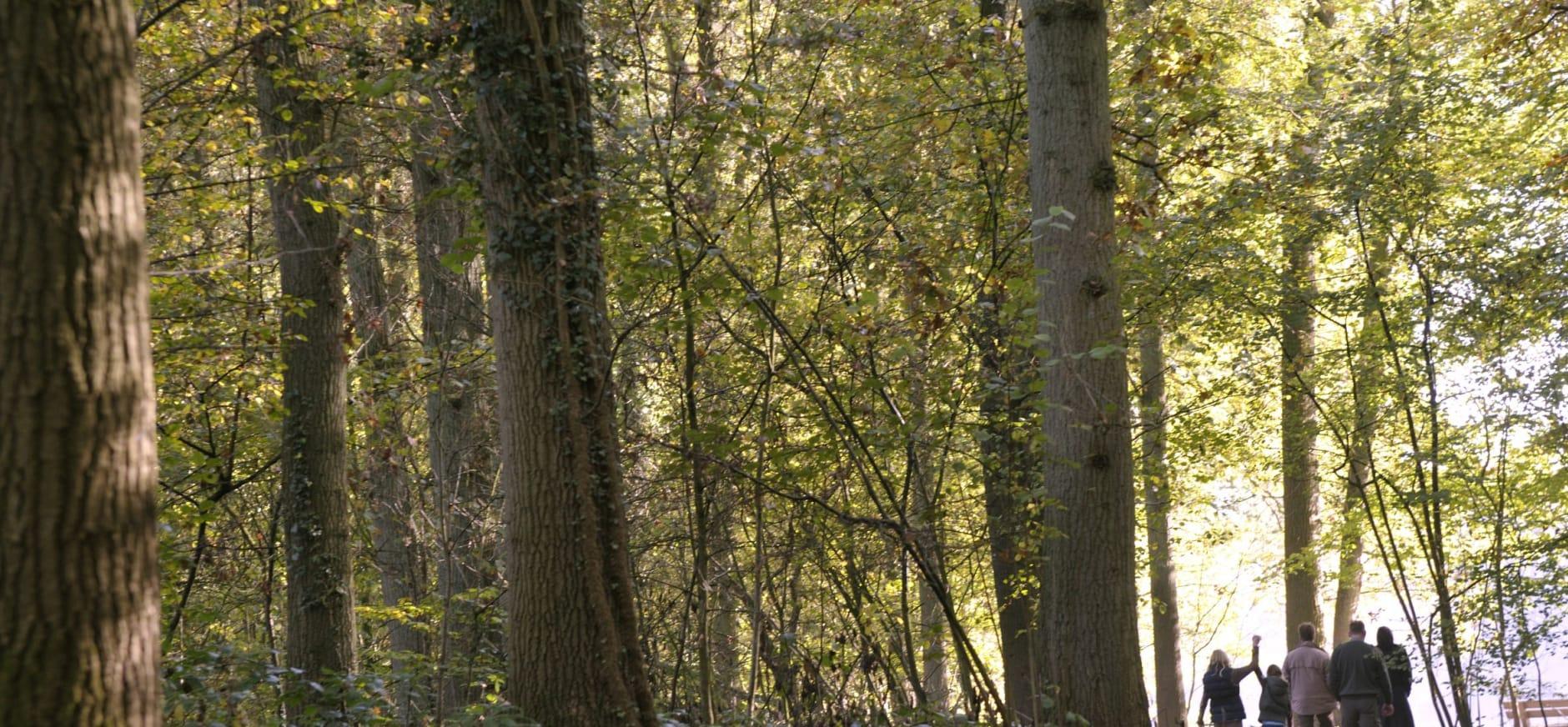 Uitleg van de boswachter op landgoed Hackfort
