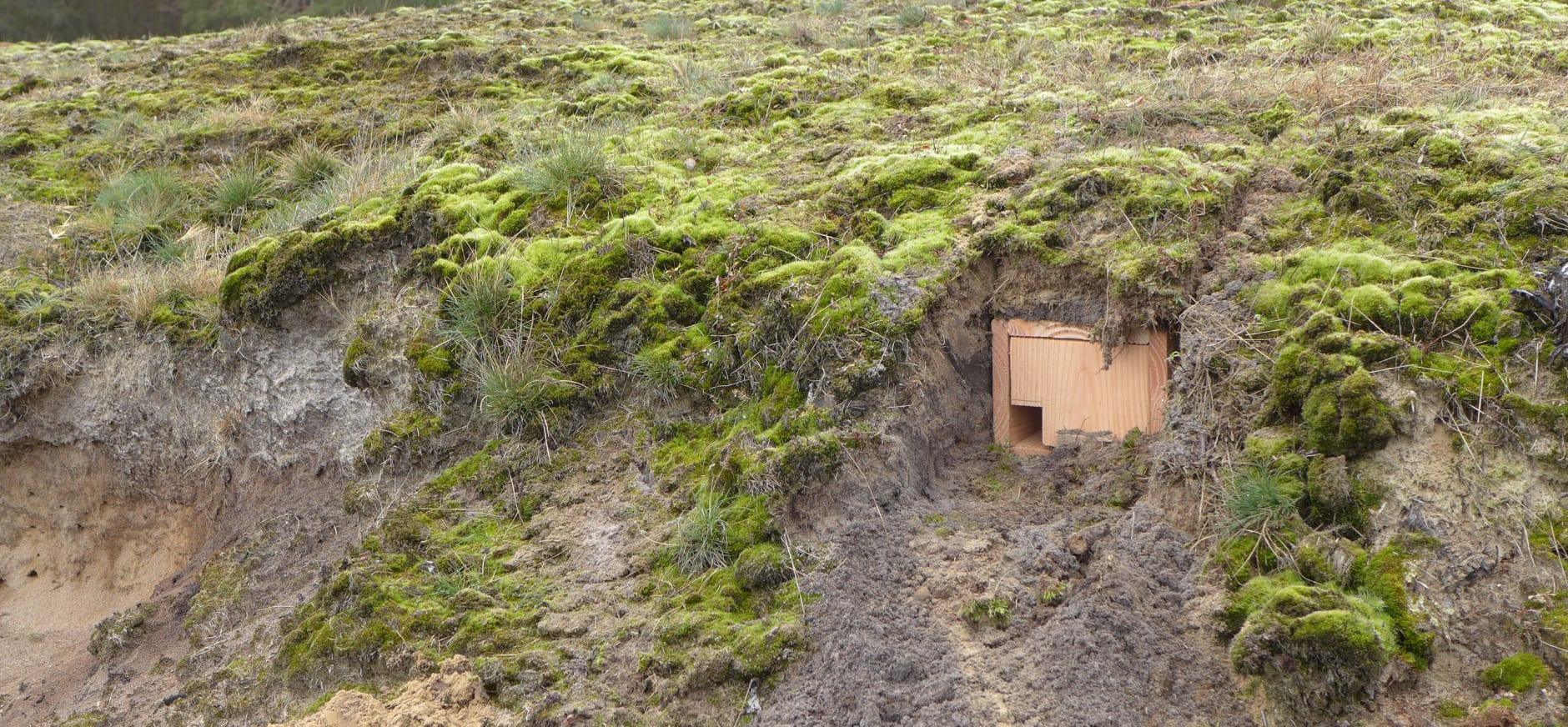 Ingegraven nestkast voor de tapuit op Planken Wambuis