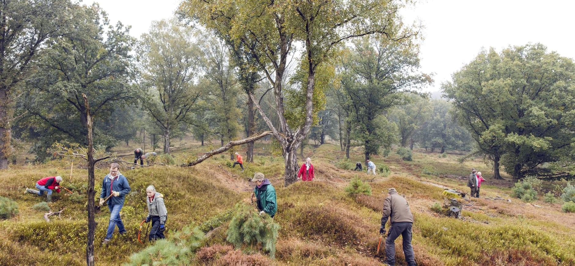 Vacature vrijwilliger natuurbeheer Planken Wambuis