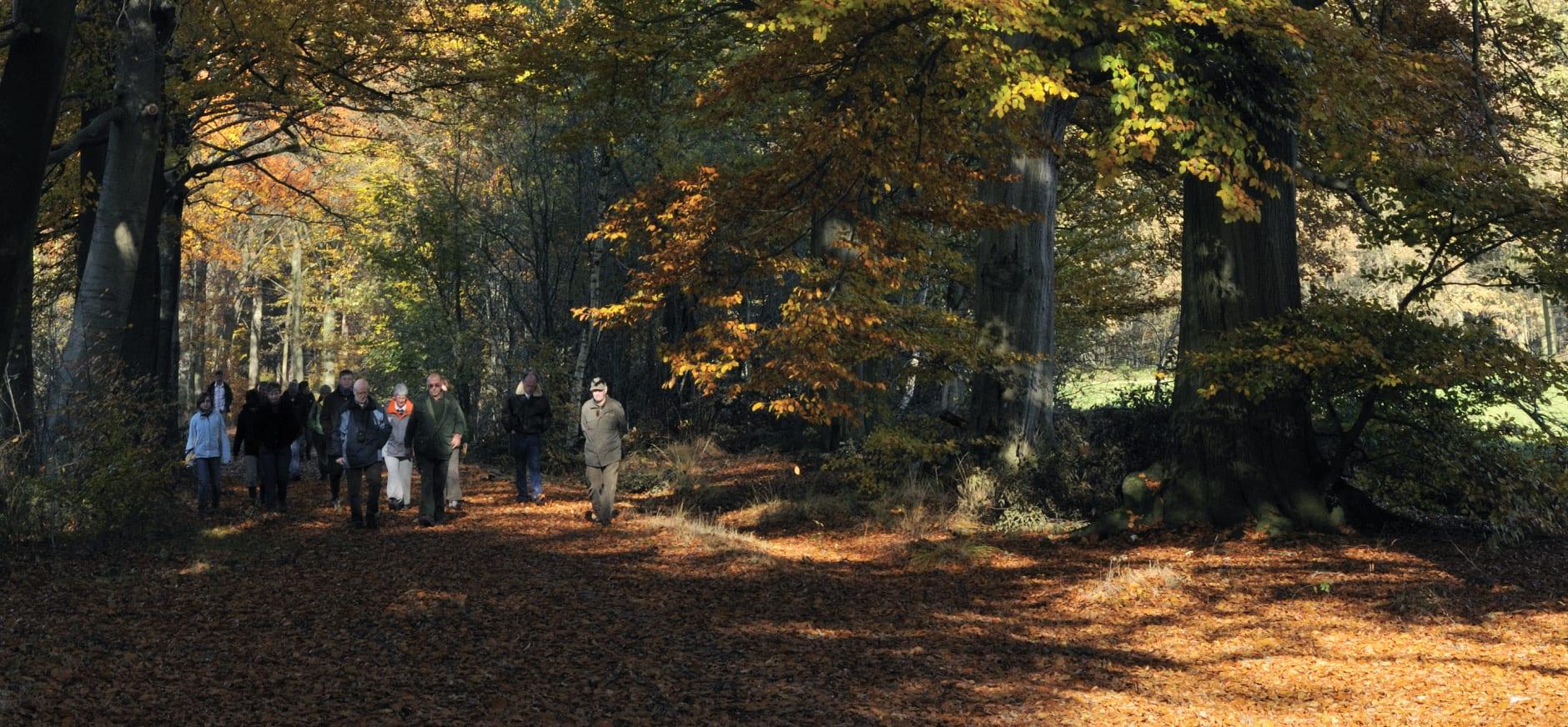 Wandeling op de Oude Buisse Heide