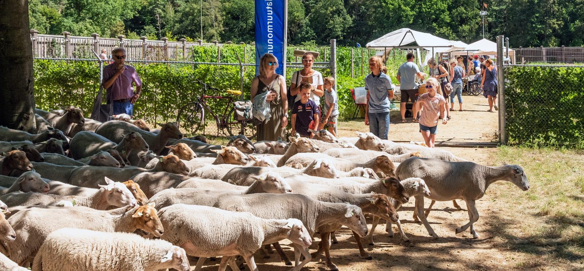 schapen op de landgoedfair