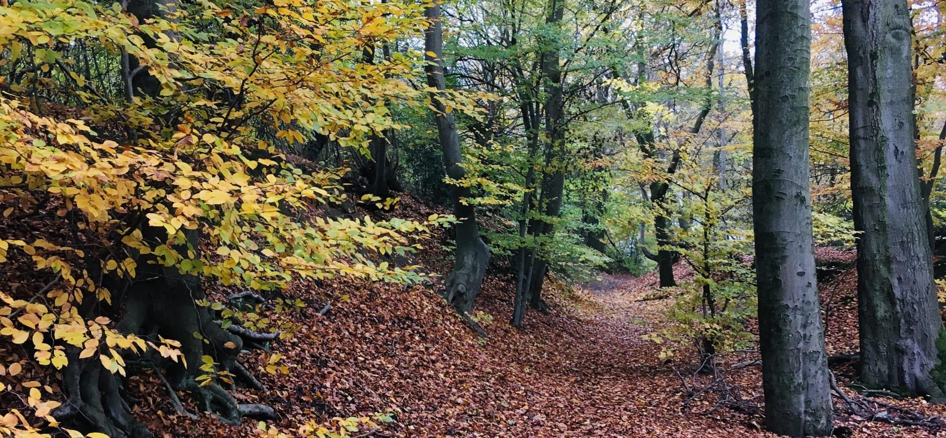 Herfst in Imstenraderbos