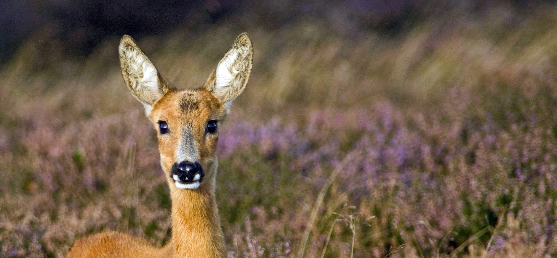 Wens voor natuur zonder barrières in Heidenatuurpark