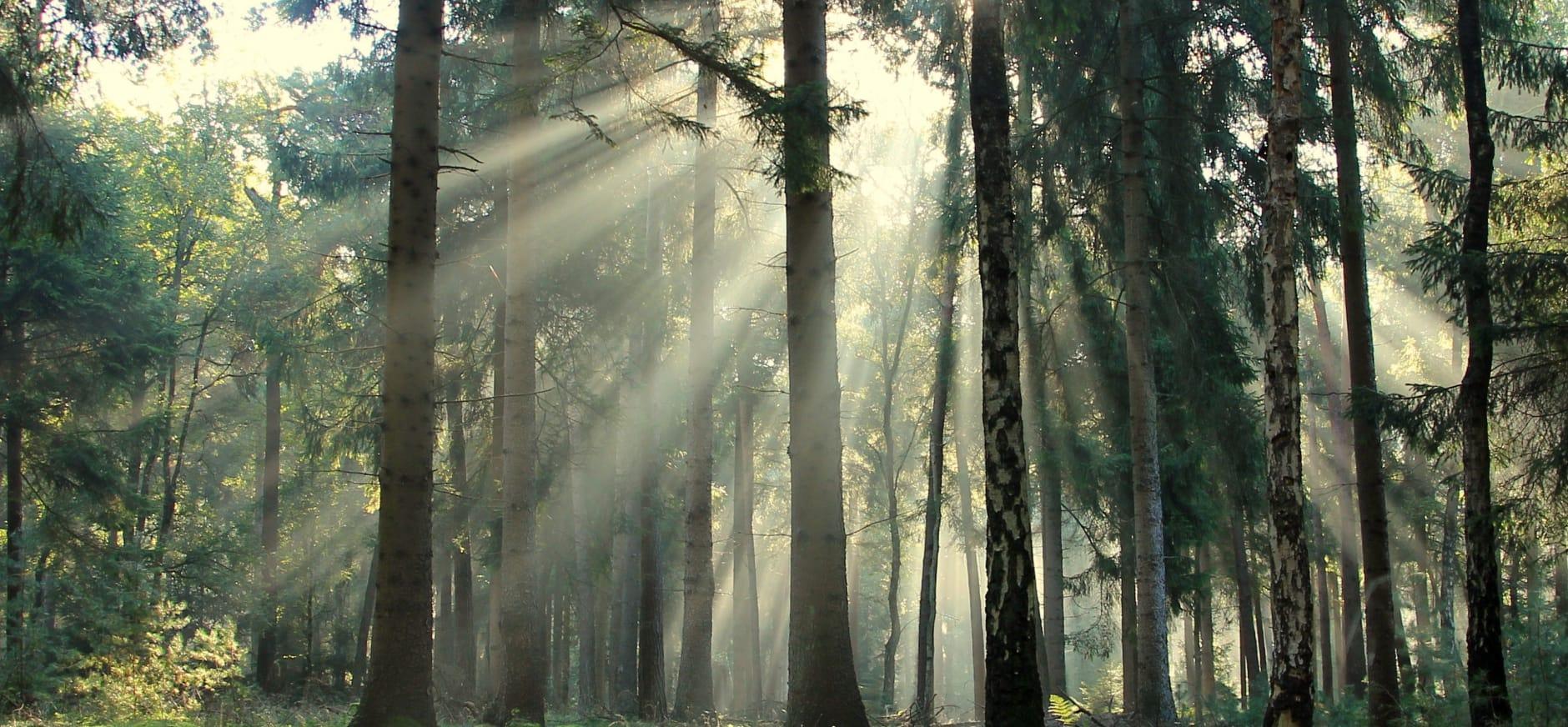 Groen bomen
