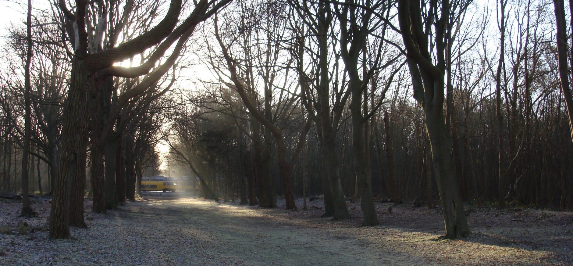 Trein door landgoed Nijenburg