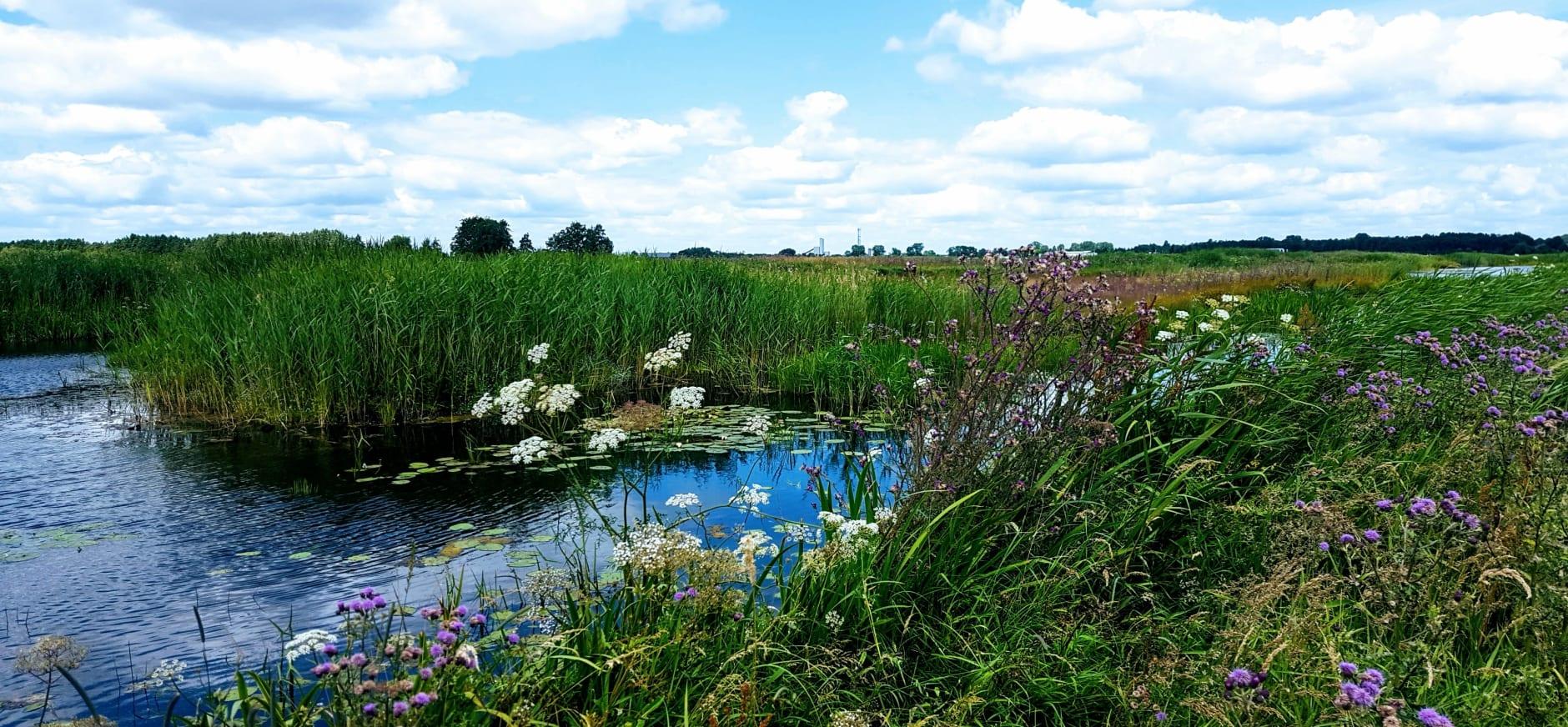 Landschap bij Giethoorn-Steenwijk 2019