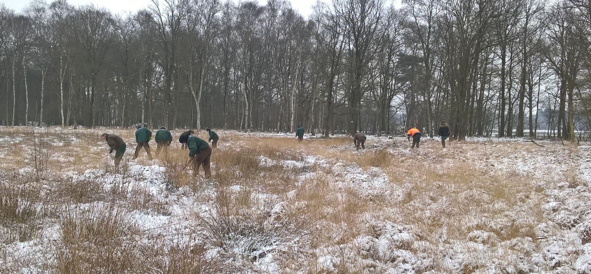 Jonge boompjes weghalen om veenmos alle ruimte te geven