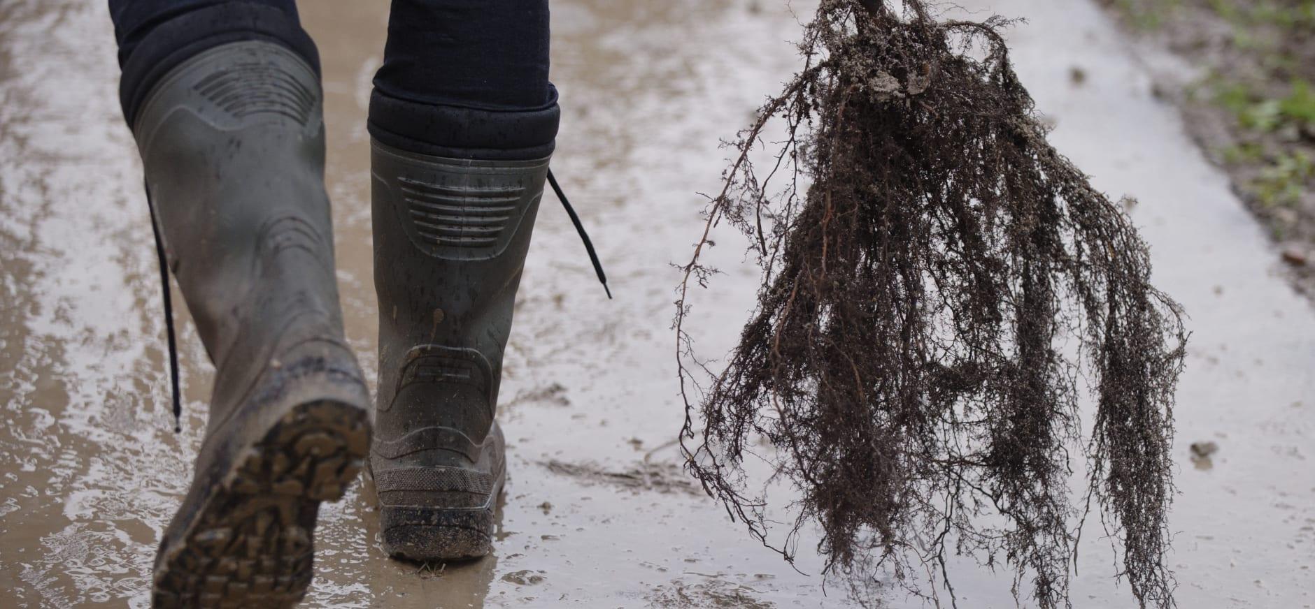 Herenboeren Groote Modderkolk gaat boomgaard aanplanten