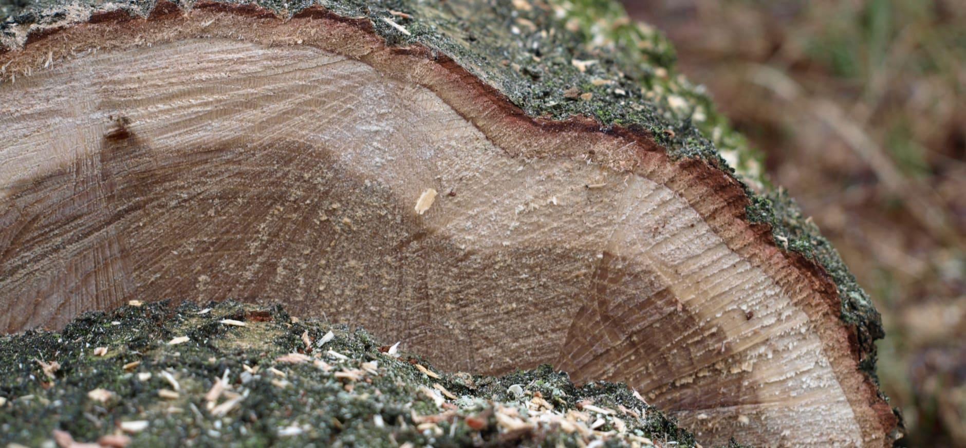 bomenkap - alje zand