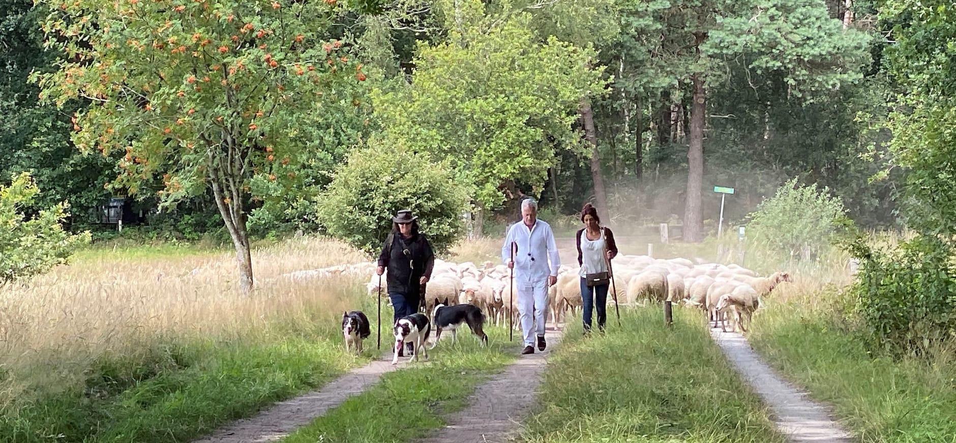 Bram Moszkowicz en Rachel Hazes onderweg met de schaapsherder