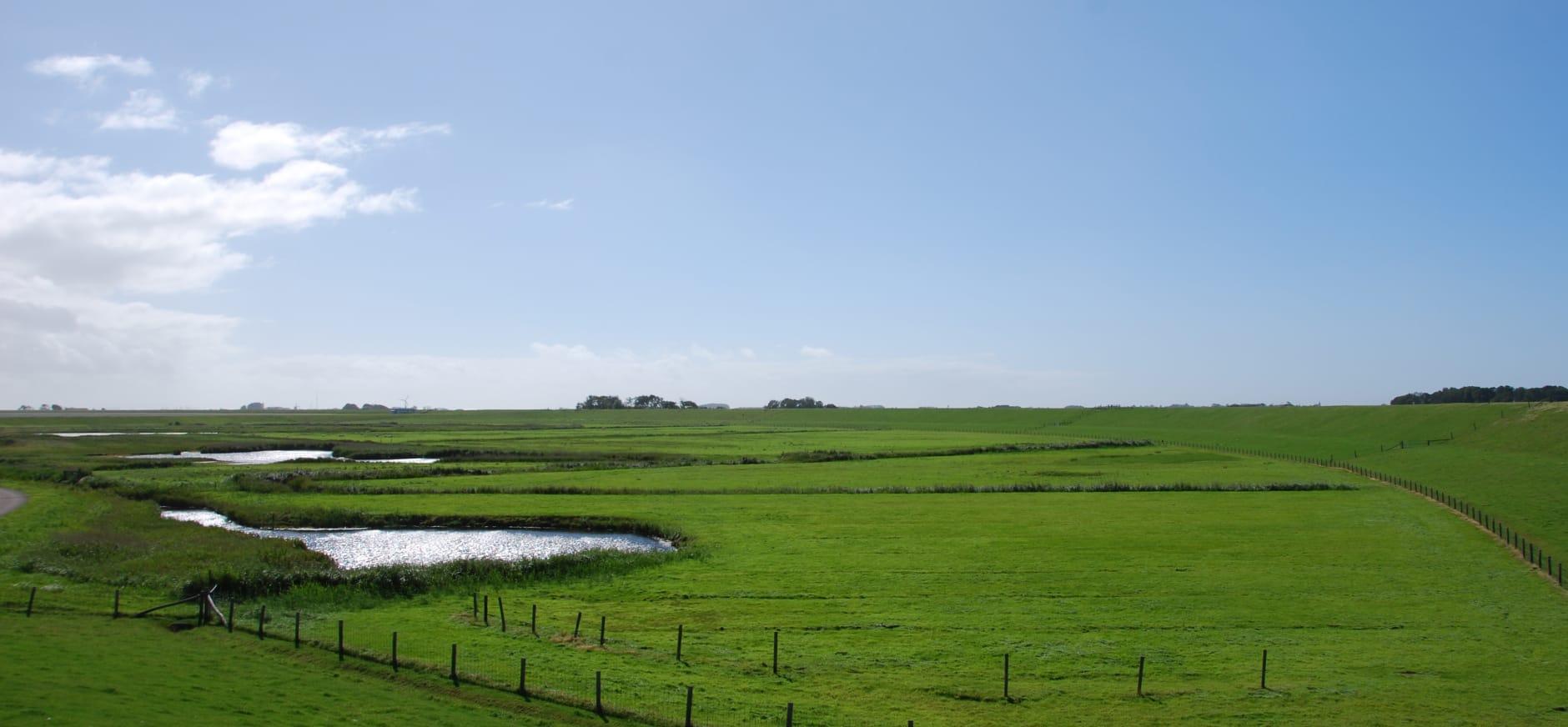 Zandkes, Texel