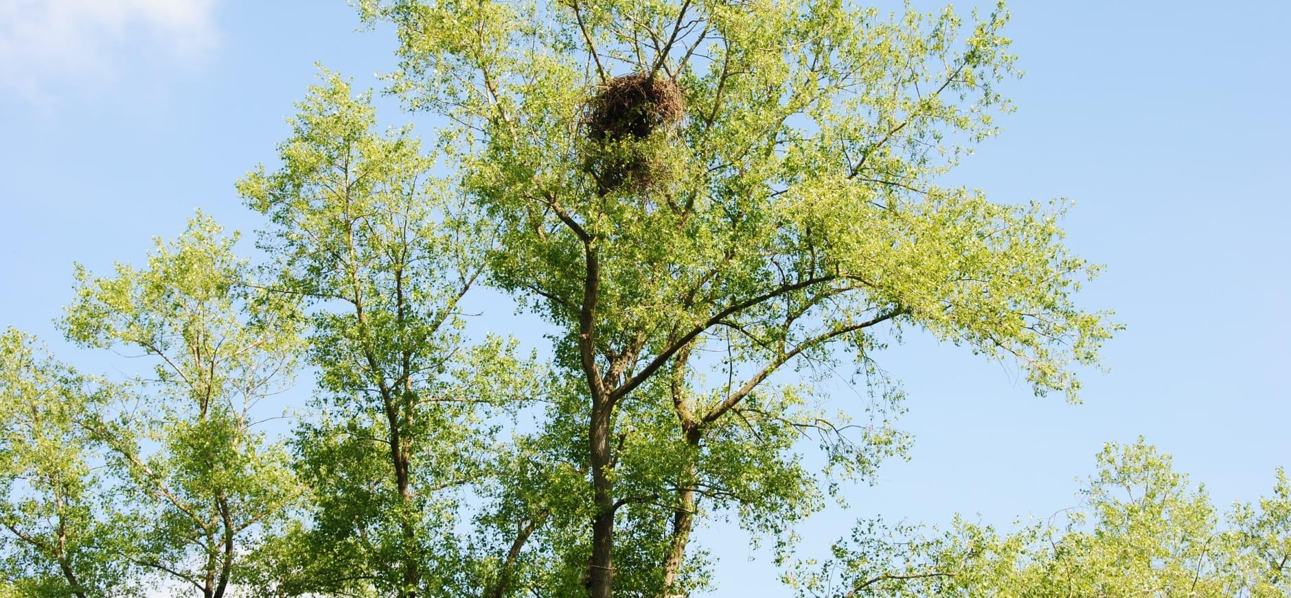 Vogeleiland met nest