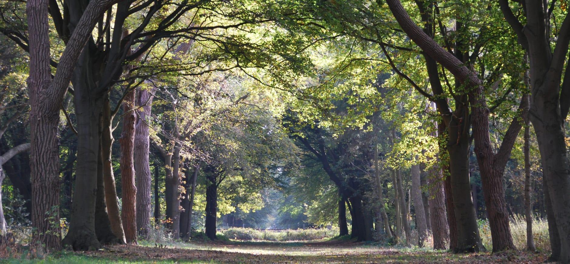 Nijenburg herfst