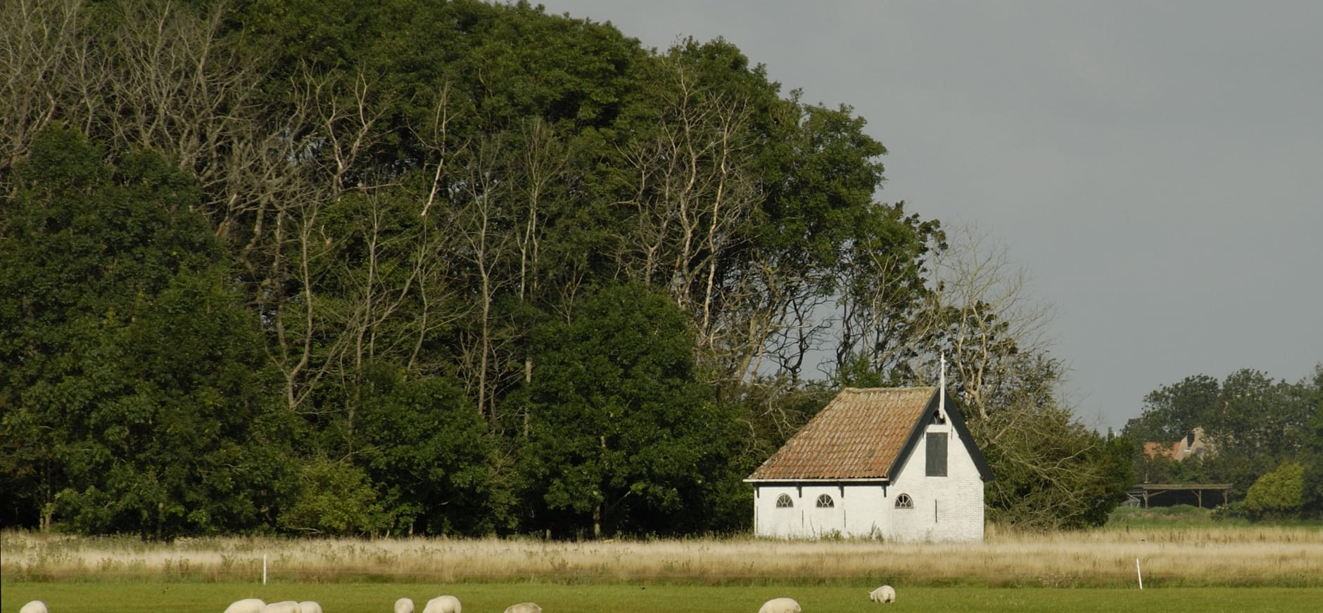 Eendenkooi Spang - Texel
