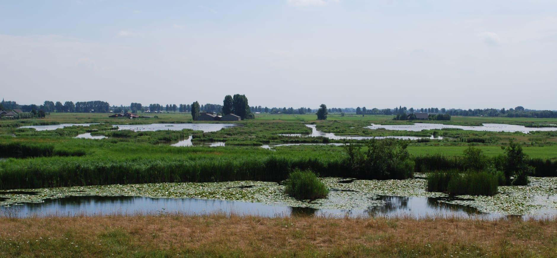 Landschap Botshol