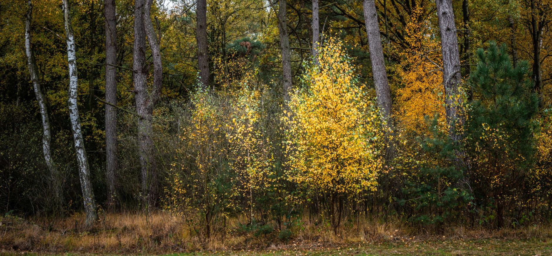 gevarieerder bos