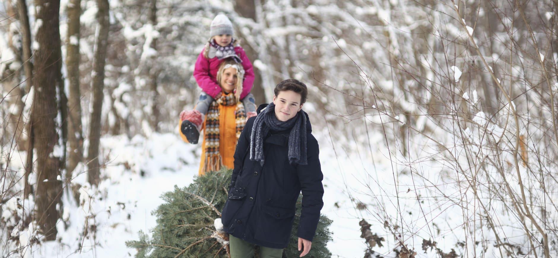 Speciale kerstboom verkoop bij Natuurmonumenten Achterhoek