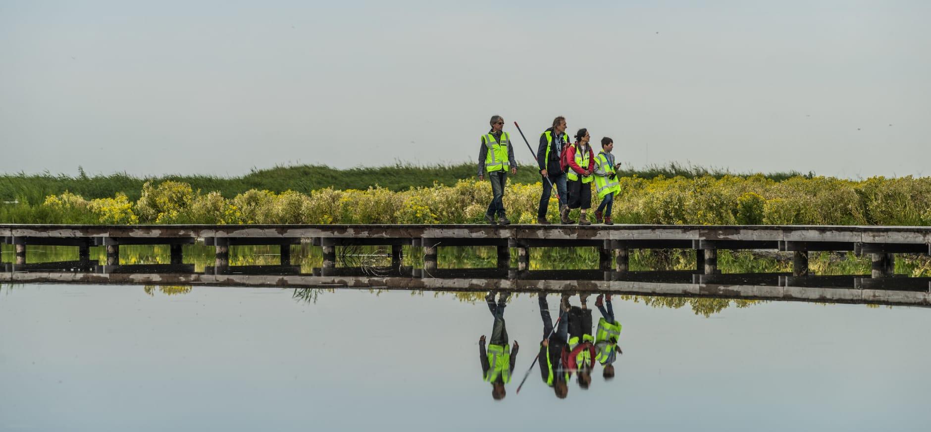 Vrijwilligers tellen planten en dieren op Marker Wadden