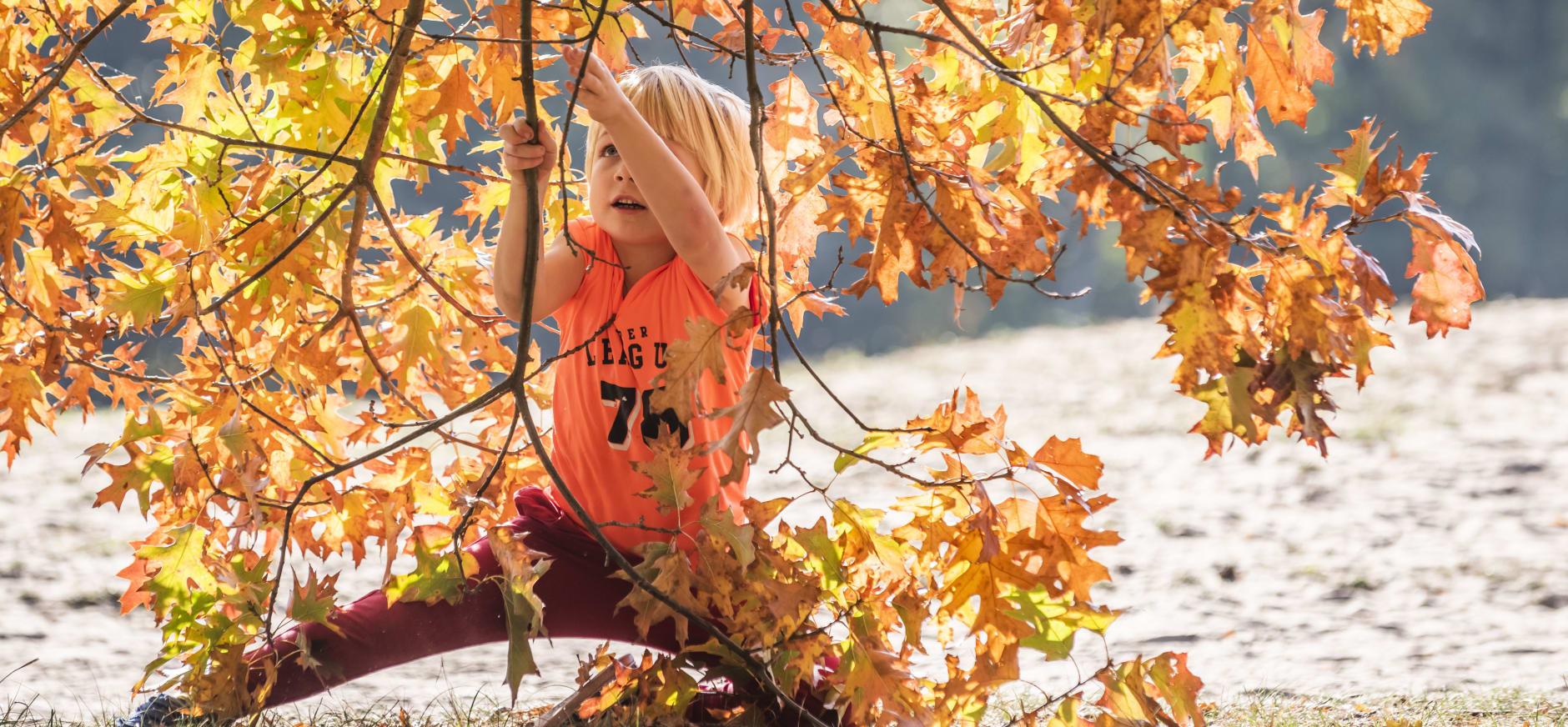 Jongen spelend in een boom - OERRR