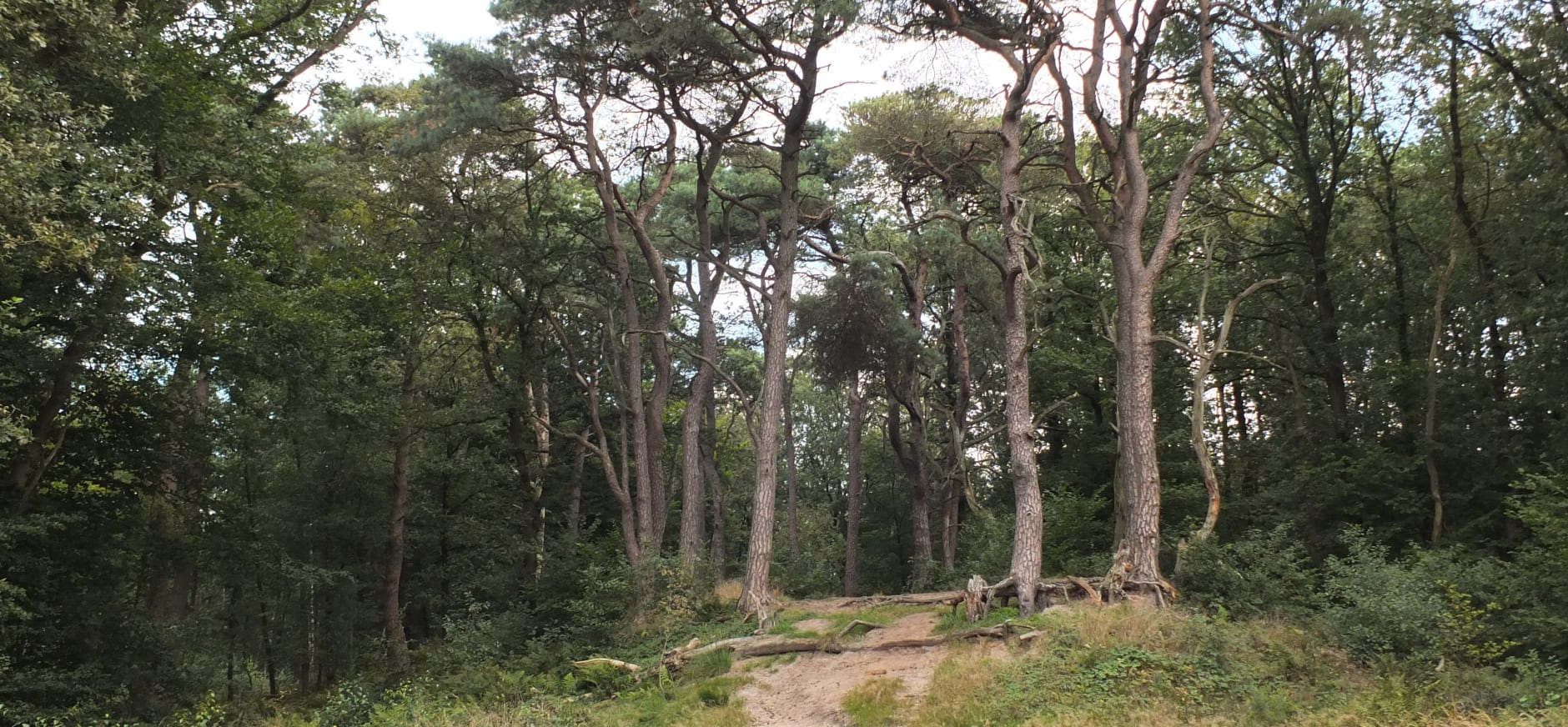 Noordlaarderbos