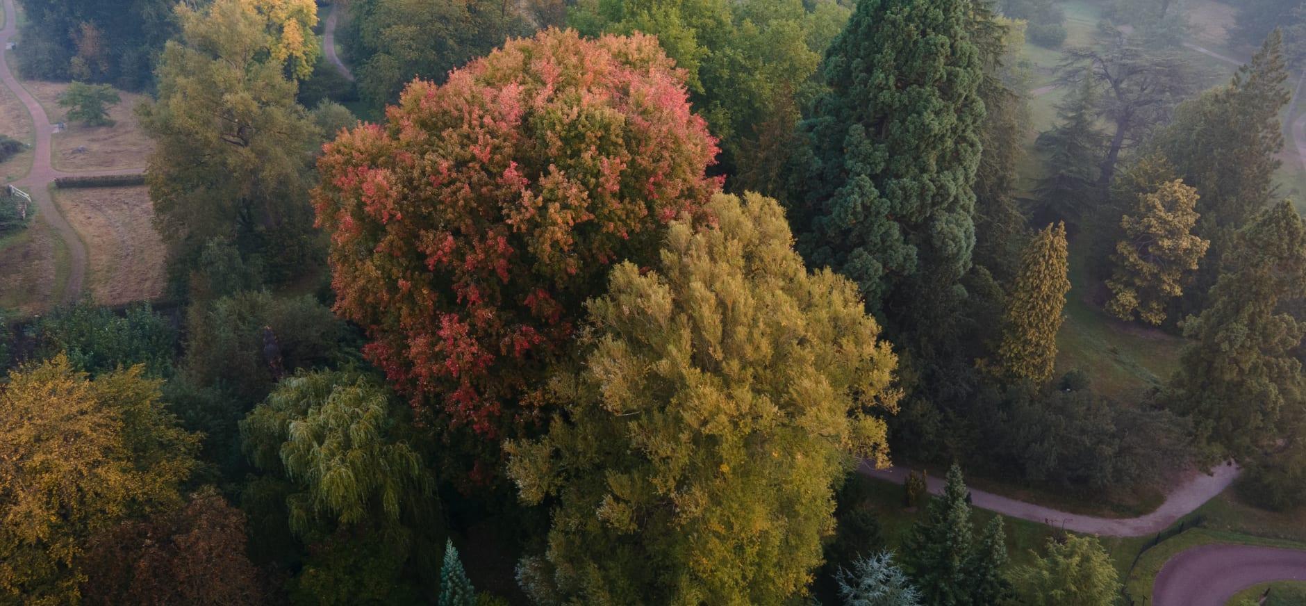 arboretum -herfst - vincent croce