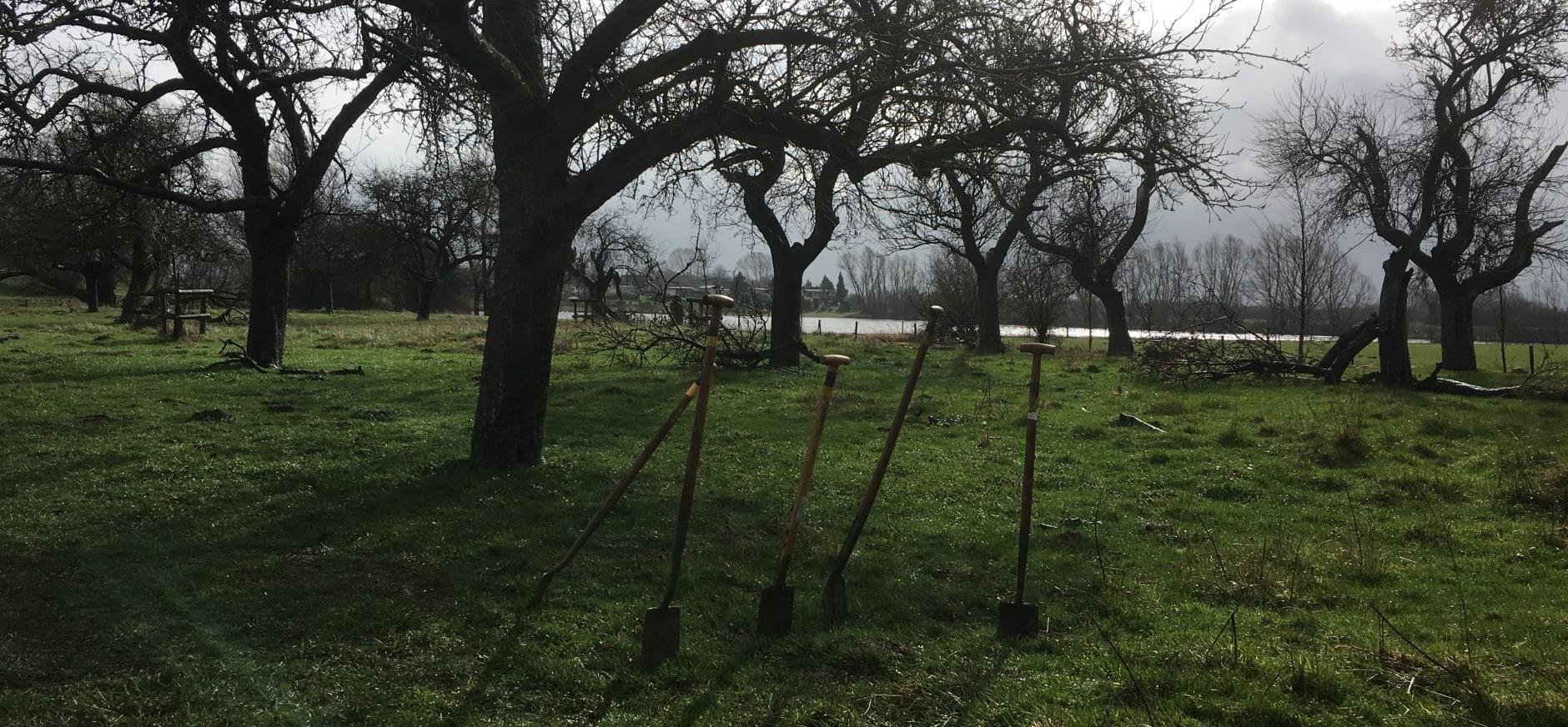 De oude boomgaard in de Koppenwaard