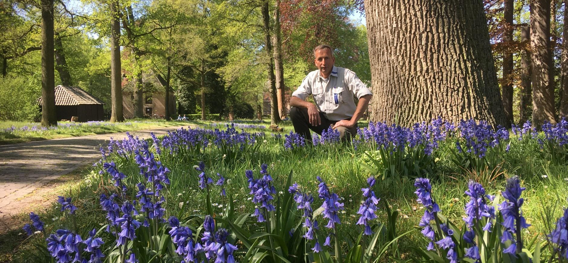 Tuinbaas Maarten Vos geniet van de stinzenplanten Spaanse hyacinten op Hackfort