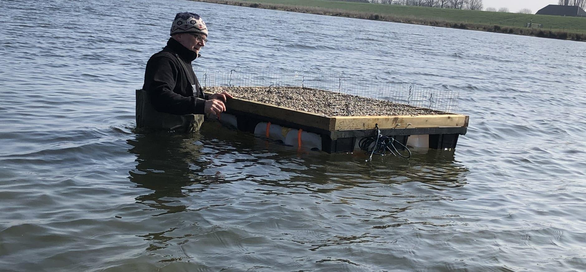 Visdiefvlot in het water