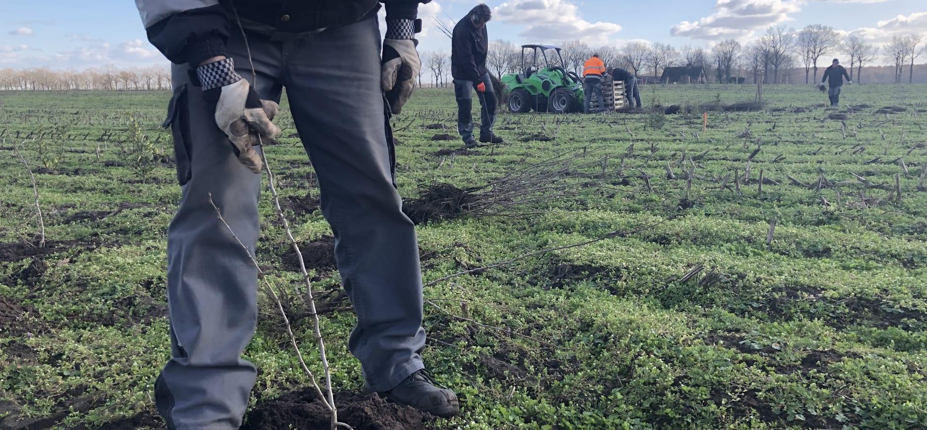 start bosaanplant Weert - feb 2021