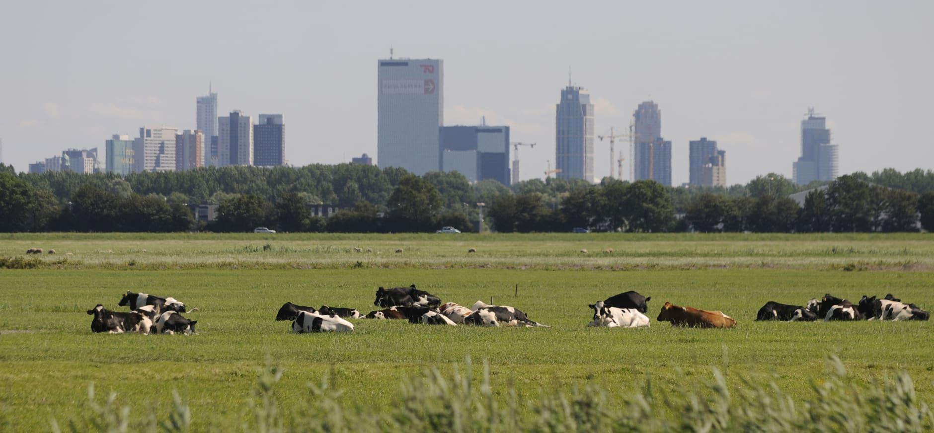 Nieuwe Natuurmonumenten wandel- en fietskaart, voor Rotterdam en omstreken