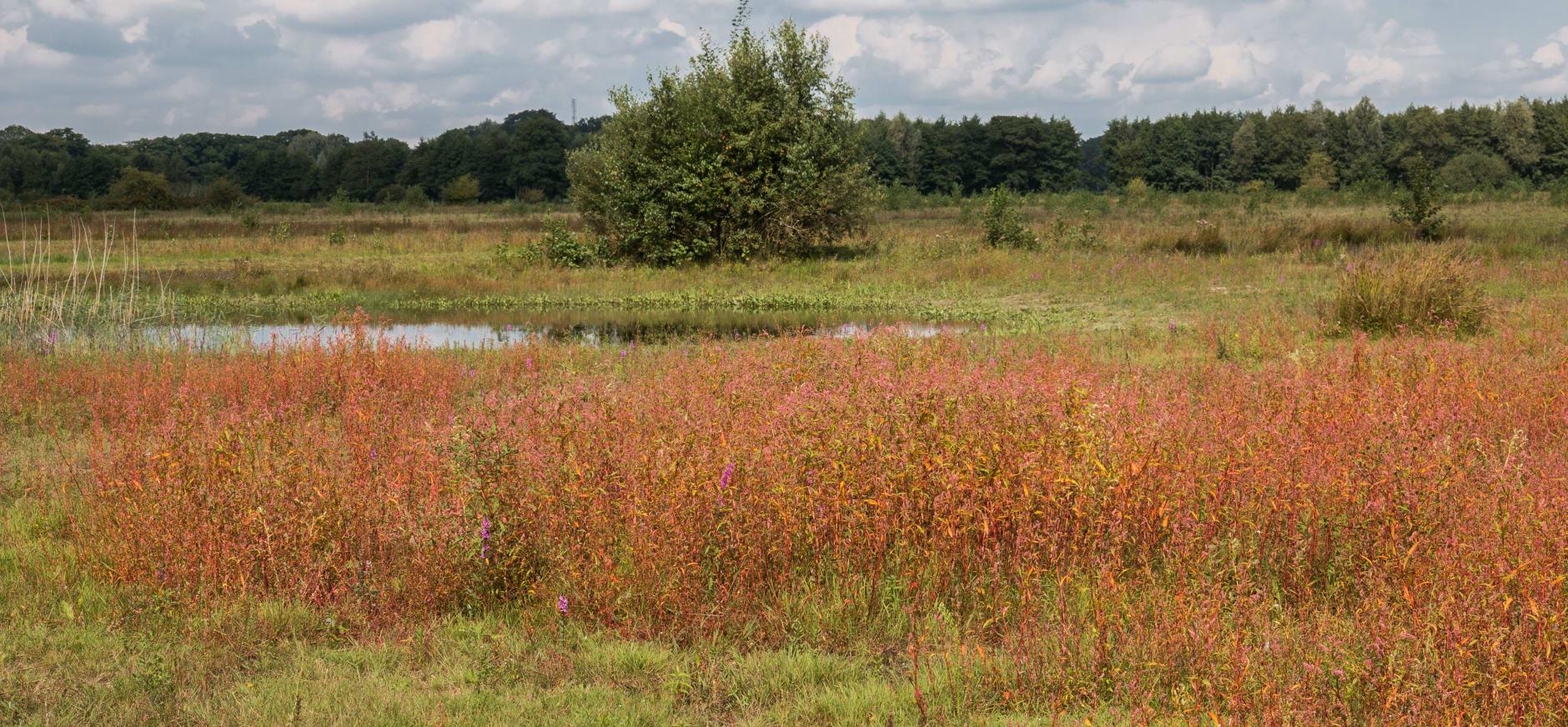Soerense Broek, jonge natuurgebied in ontwikkeling