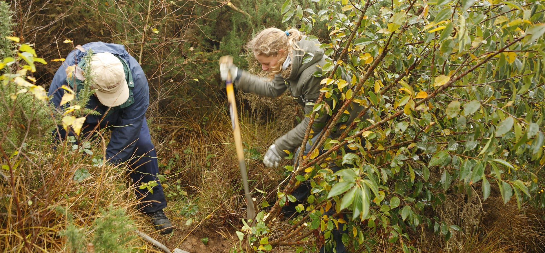 Vrijwilligers prunus verwijderen