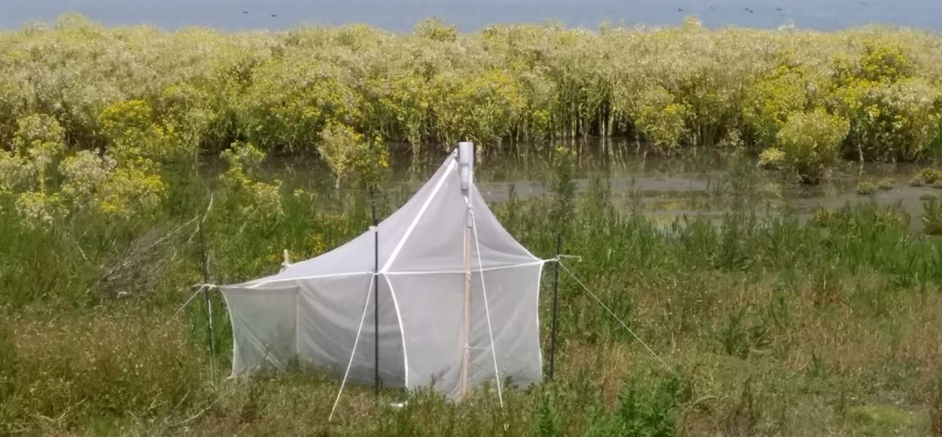 insectenonderzoek Marker Wadden