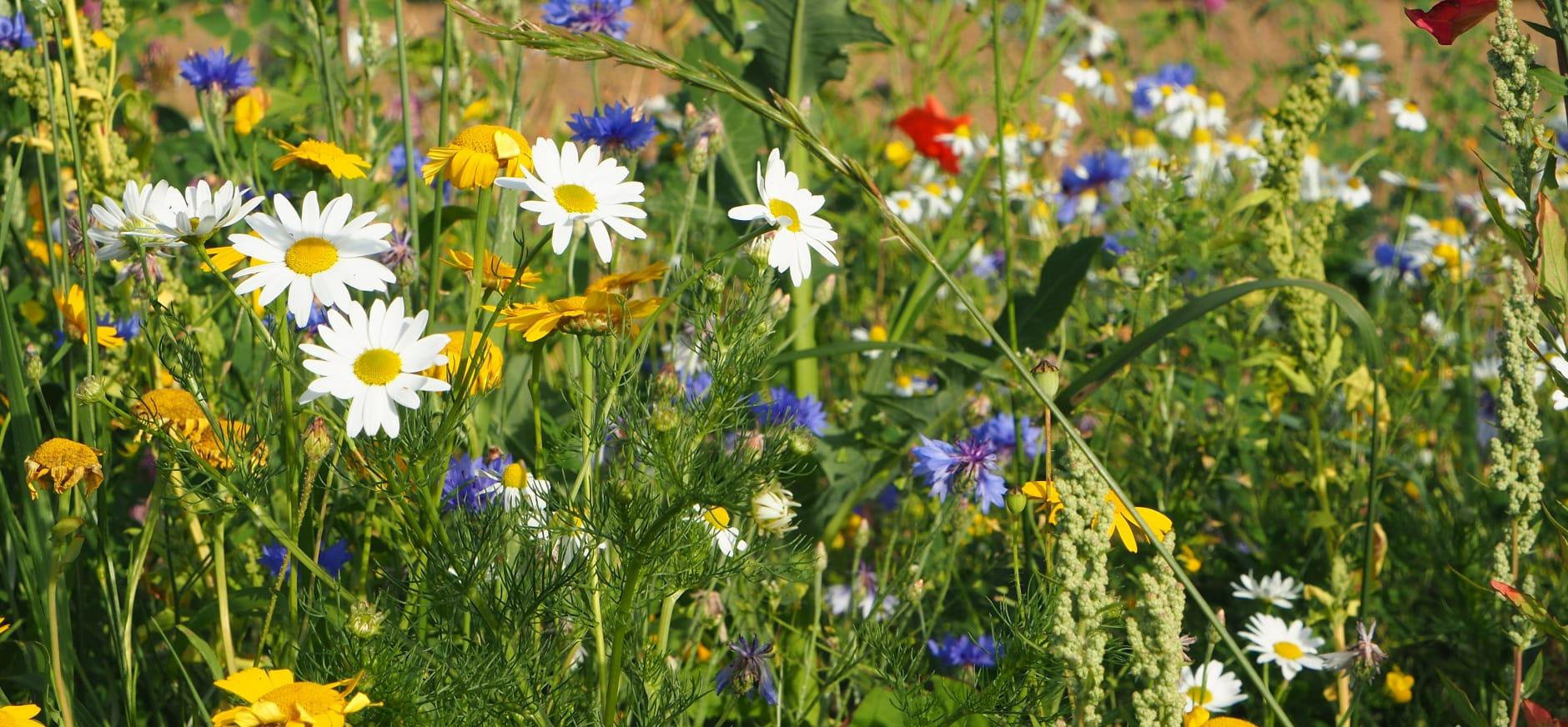 Gazon vol bloemen tuintip