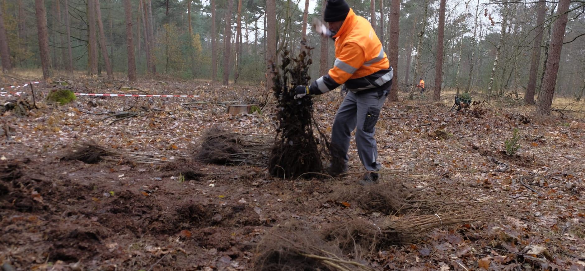 boswerkzaamheden Laurabossen