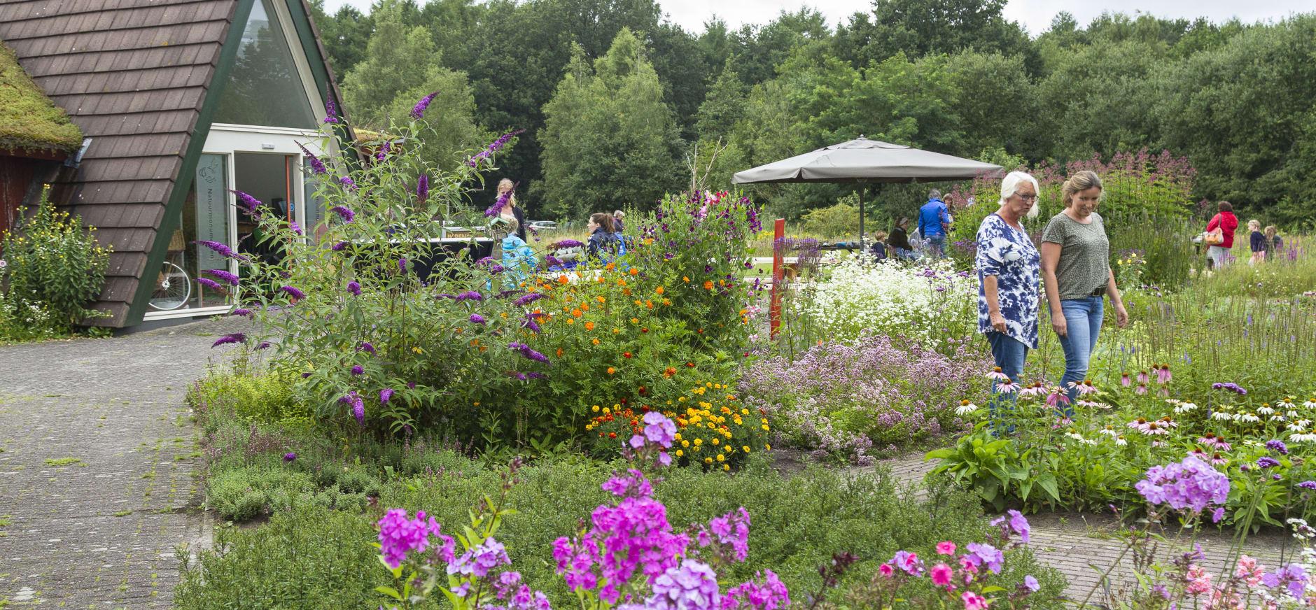 Vlindertuin bij bezoekerscentrum Dwingelderveld