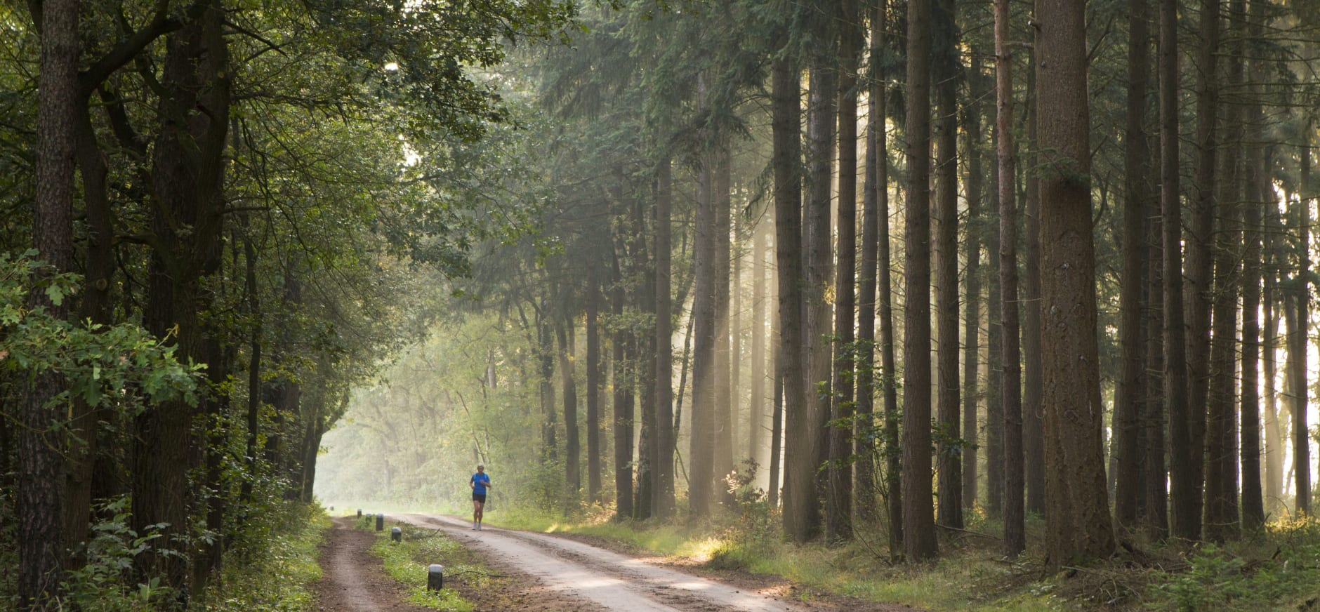Op bomen langs wegen letten de boswachters extra goed voor de veiligheid van de recreanten