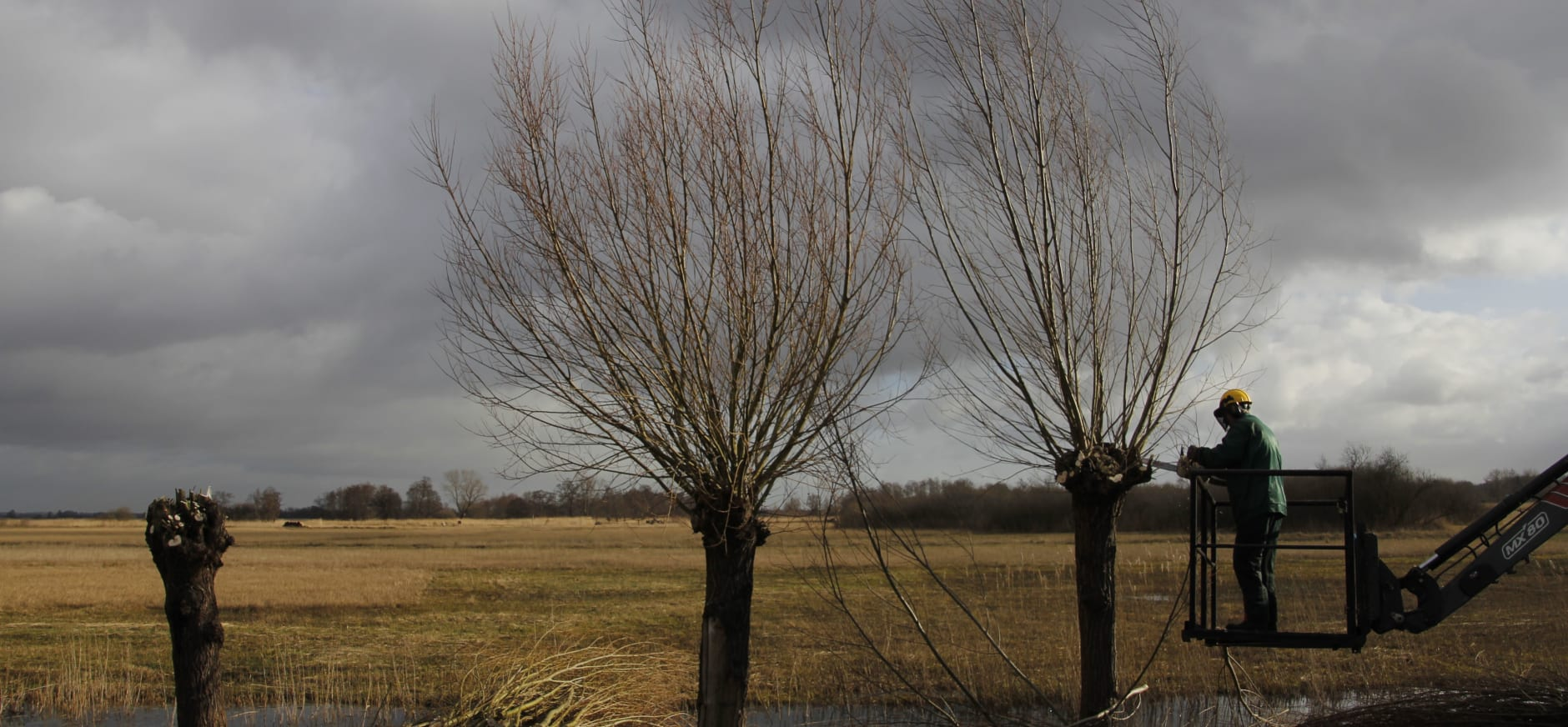 Vrijwilligers snoeien de knotwilgen aan de Beulakerweg in Giethoorn
