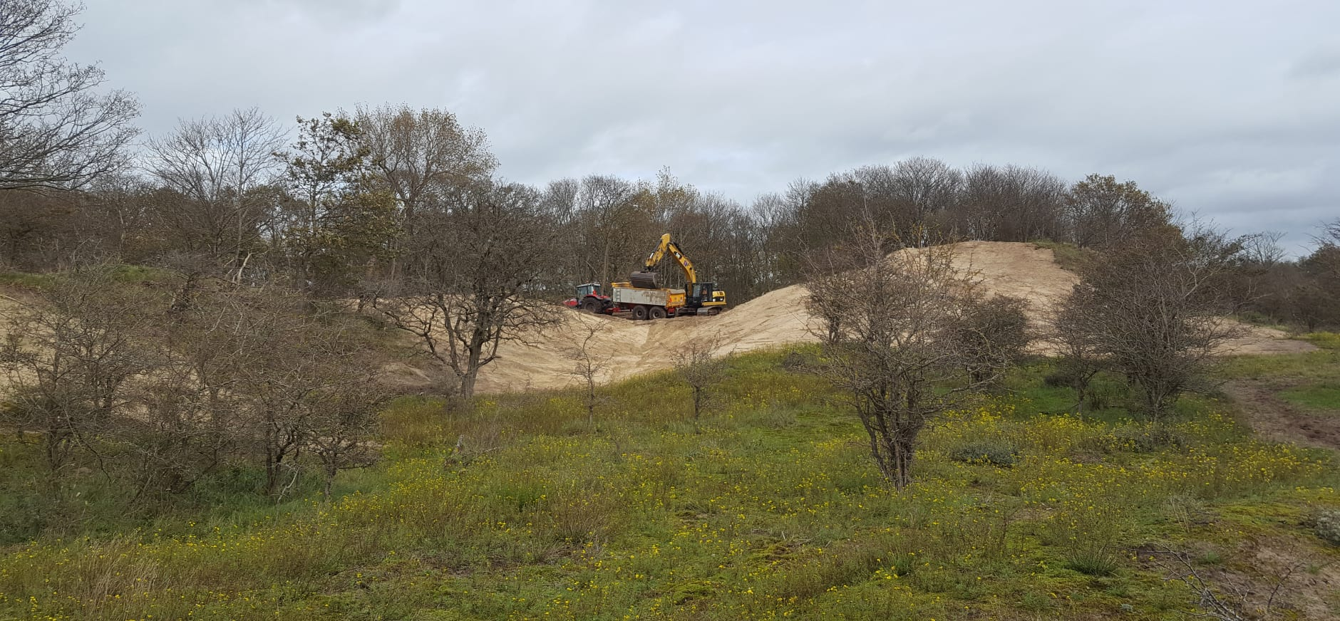 nieuwe kansen voor duingrasland in Duin en Kruidberg