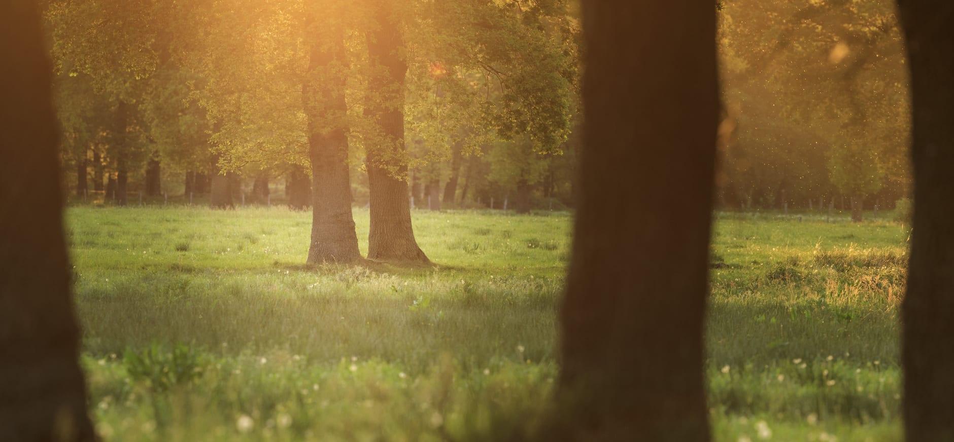 natuurgrondenruil Limburg