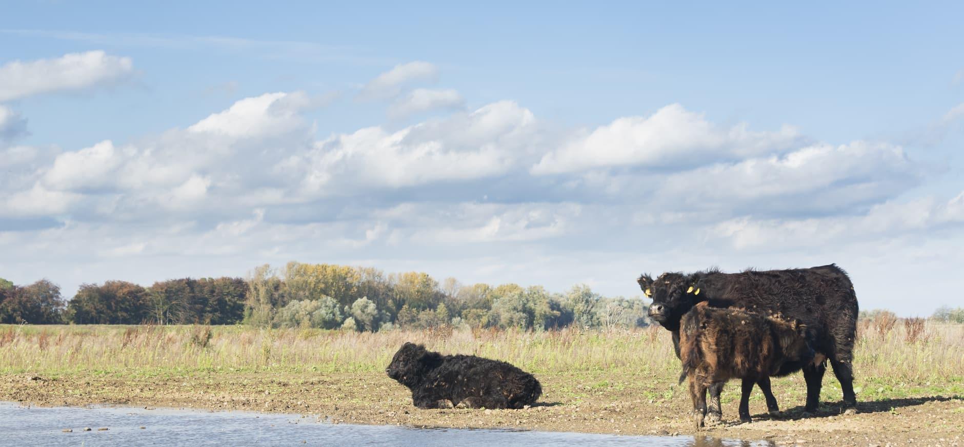 Onmisbare grazers
