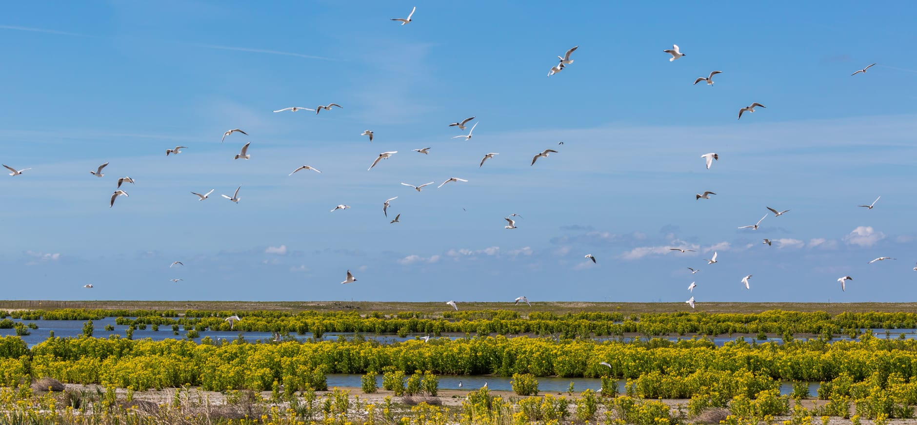 Het ondiepe water op Marker Wadden bevat veel voedsel voor vogels