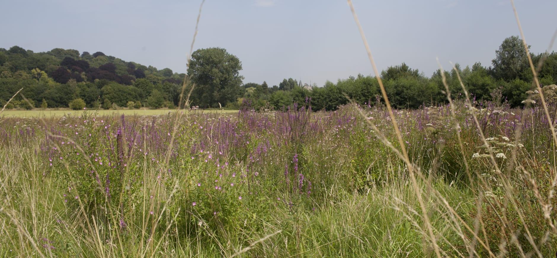 Natuurmonumenten zoekt boeren voor geselecteerde graslandpercelen in de IJsselvallei