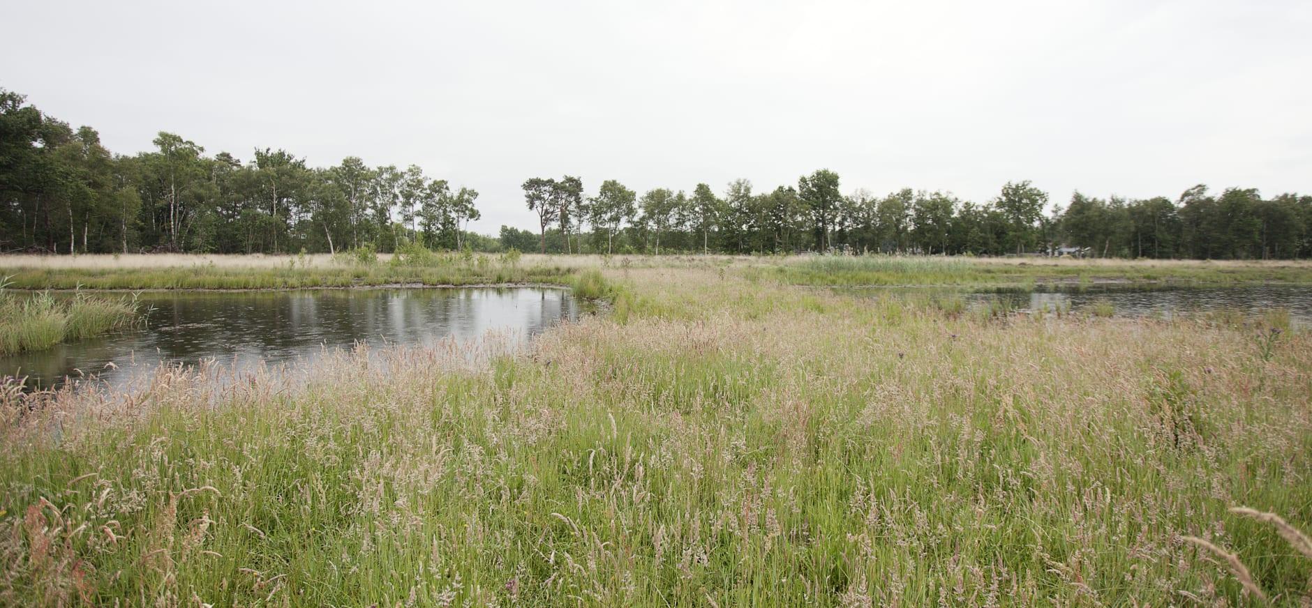 Soesterveen