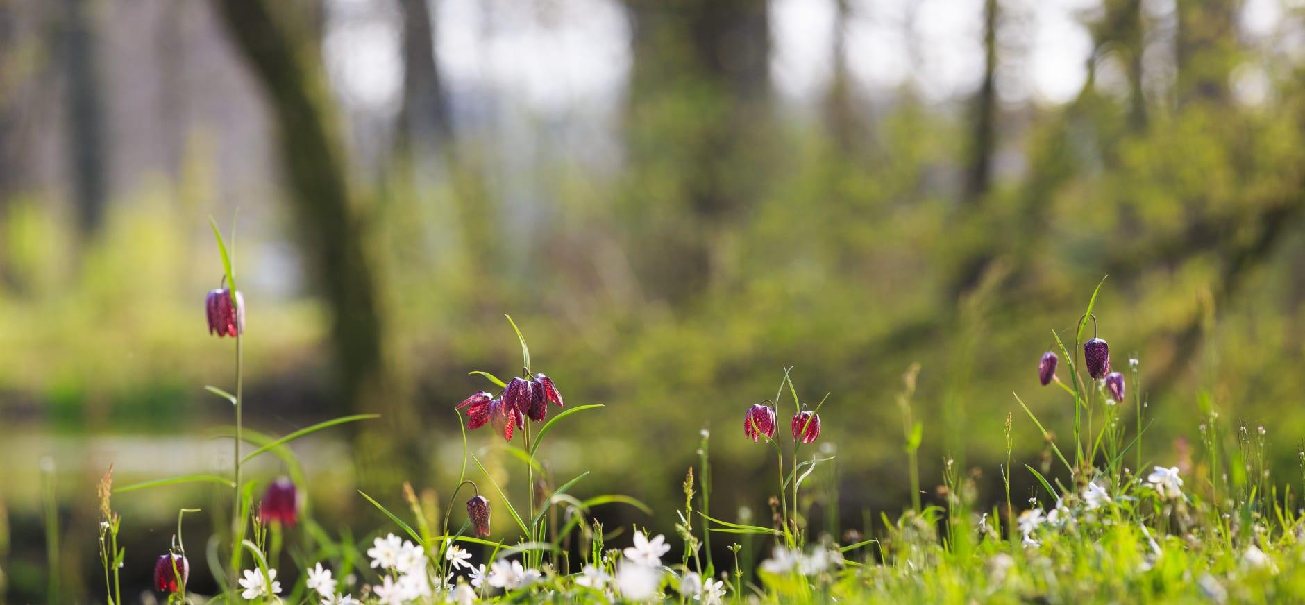 voorjaar op Hackfort
