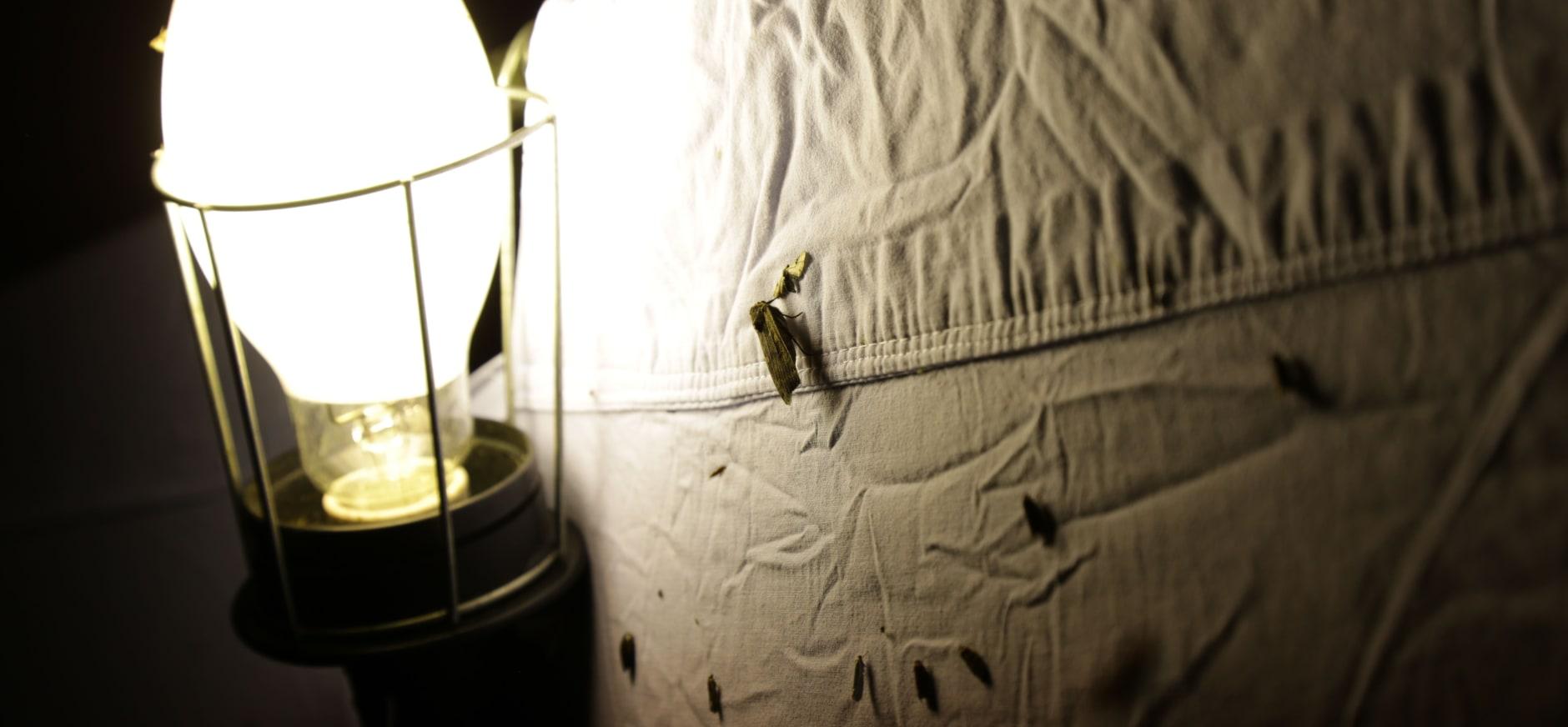 Nachtvlinders tellen