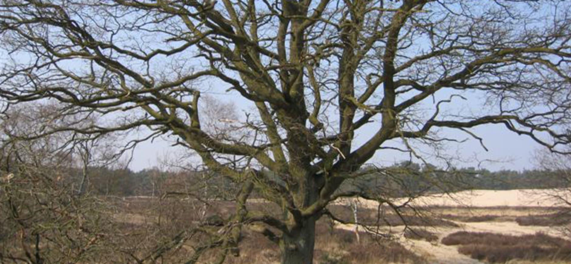Bomen en Nederland