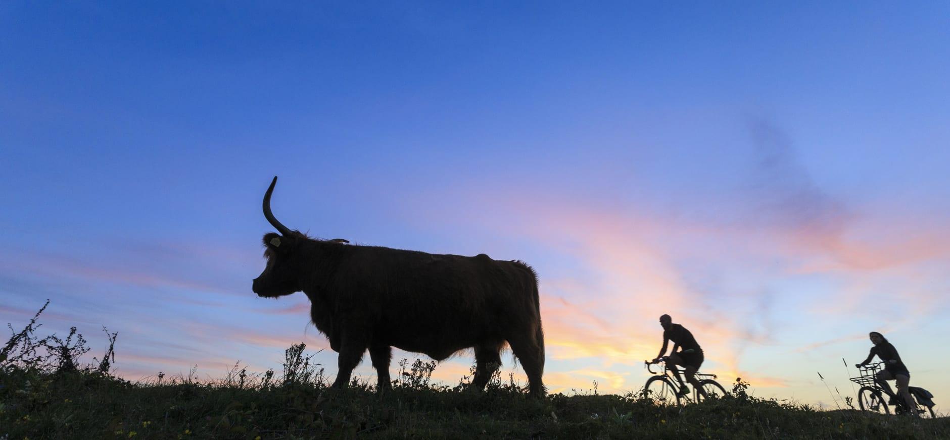 hooglander en fietsers