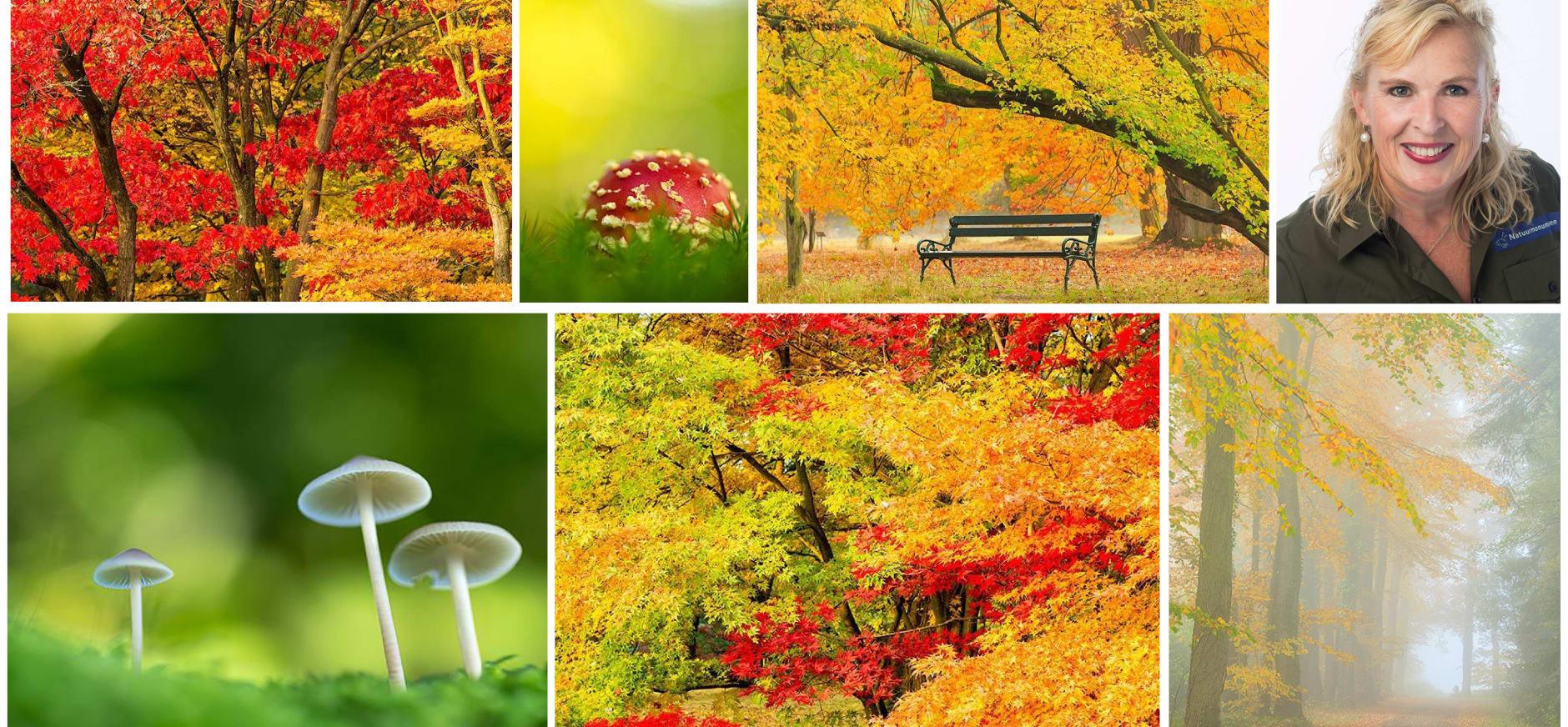 simone damhof Twente blog 5 herfst